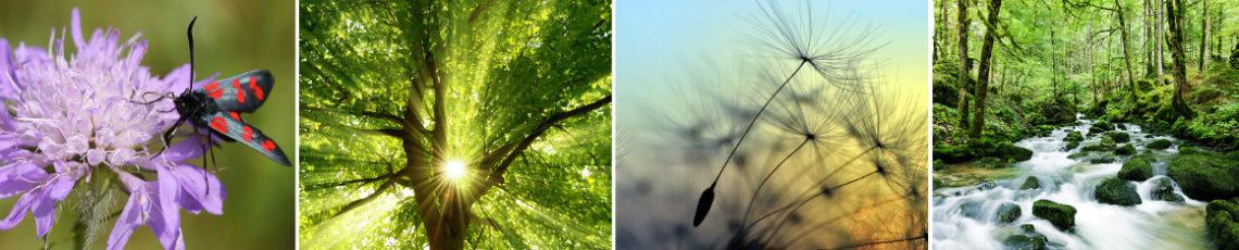 Naturveranstaltungen & Naturseminare in Franken